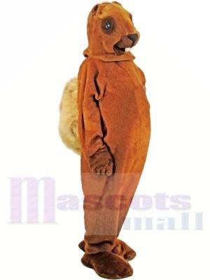 A Medium-brown Squirrel Mascot Costumes